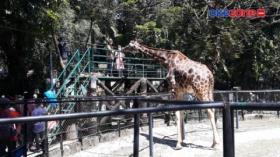 Mudik Dilarang, Kebun Binatang Surabaya Ramai saat Lebaran