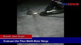 Evakuasi Ular Piton Melilit Motor Warga