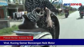 Viral, Kucing Gemar Boncengan Naik Motor
