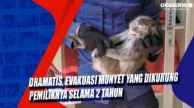 Dramatis, Evakuasi Monyet yang Dikurung Pemiliknya Selama 2 Tahun
