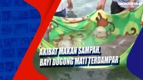 Akibat Makan Sampah, Bayi Dugong Mati Terdampar