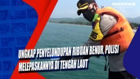 Ungkap Penyelundupan Ribuan Benur, Polisi Melepaskannya di Tengah Laut