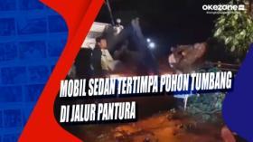 Mobil Sedan Tertimpa Pohon Tumbang di Jalur Pantura