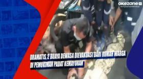 Dramatis, 2 Buaya Dewasa Dievakuasi dari Rumah Warga di Pemukiman Padat Kemayoran