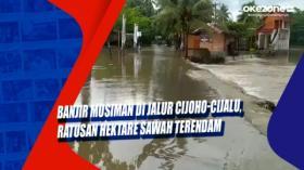 Banjir Musiman di Jalur Cijoho-Cijalu, Ratusan Hektare Sawah Terendam