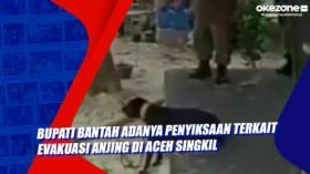 Bupati Bantah Adanya Penyiksaan Terkait Evakuasi Anjing di Aceh Singkil