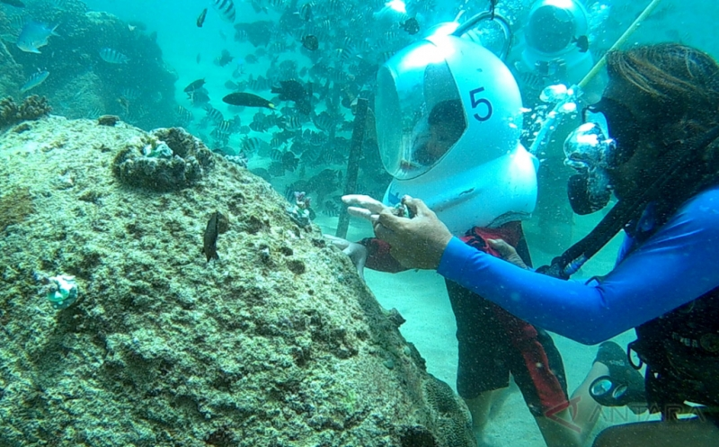 Wisatawan Asing Ikut Penanaman Terumbu Karang