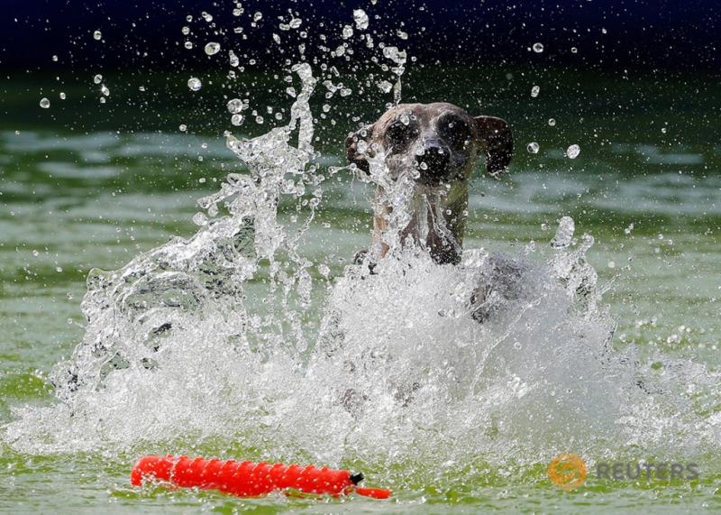 Lucunya Lihat Anjing Peliharaan Lompat di Atas Air