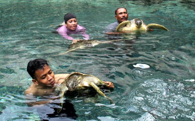 Asyiknya Wisata Berenang Bersama Penyu di Pulau Liukang Loe Bulukumba