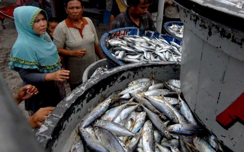 Cuaca Buruk Tangkapan Ikan Nelayan Sampang Merosot 25 Persen