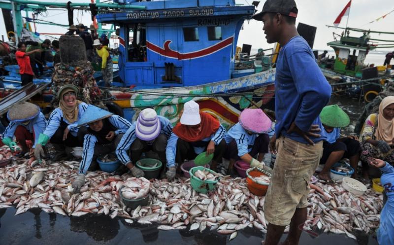 Ikan Tangkapan Nelayan saat Ini Belum Cukup untuk Bahan Baku Industri