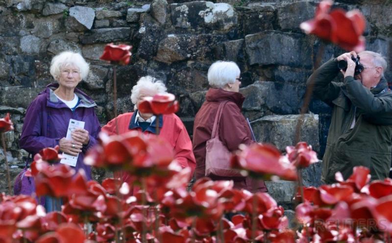 Mengenang Seabad Perang Dunia I lewat Ratusan Ribu Bunga Poppy Merah di Kastil