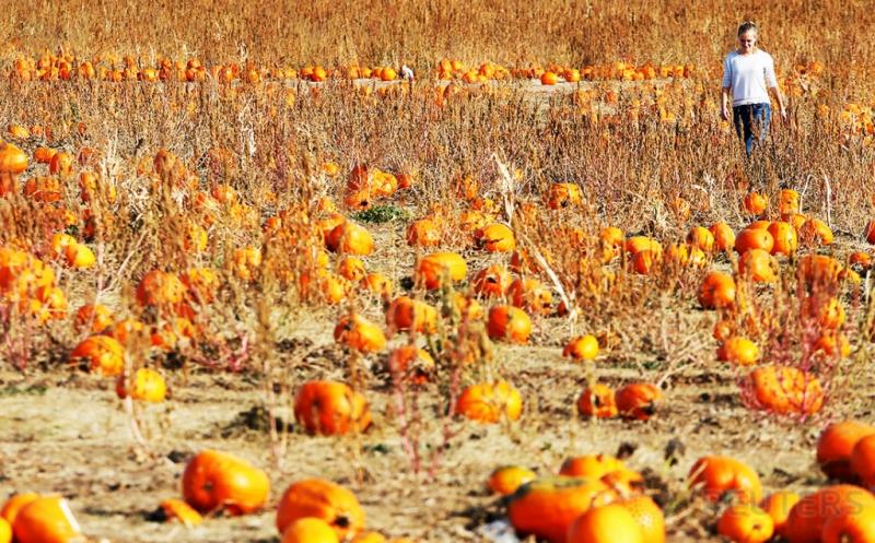 Permintaan Buah yang Identik dengan Halloween