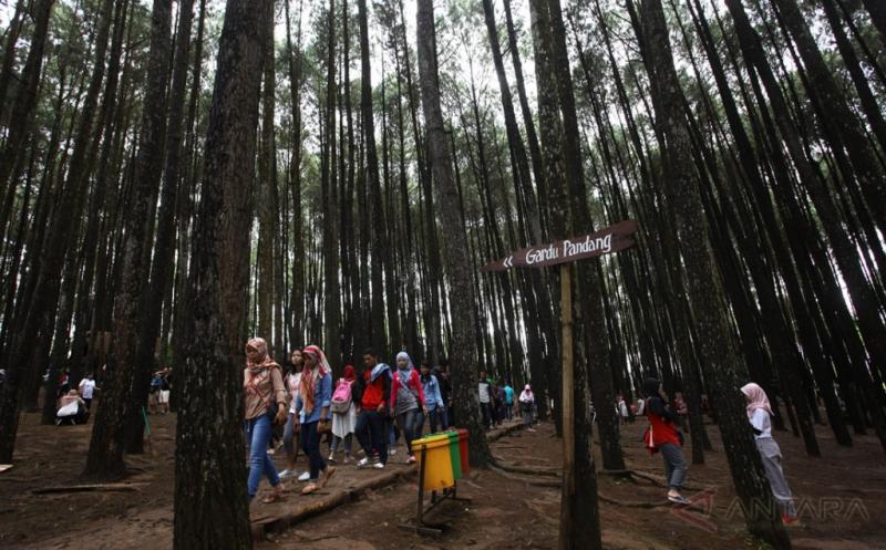 Menikmati Destinasi Wisata Alam Hutan Pinus Mangunan