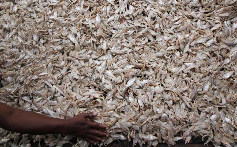 Cuaca Tak Menentu, Produksi Ikan Asin di Surabaya Menurun 40 %
