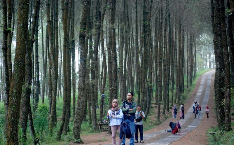 Sejumlah wisatawan mengunjungi Hutan Pinus Kragilan di Pakis, Kabupaten Magelang, Jawa Tengah, Kamis (12/1/2017). Meskipun masih dikelola Karang Taruna setempat, hutan seluas sepuluh hektare tersebut menjadi salah satu magnet baru bagi wisatawan di Magelang.
