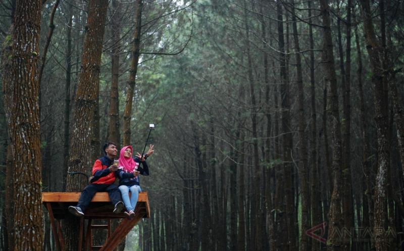 Hutan Pinus Kragilan Sedot Perhatian Wisatawan di Magelang