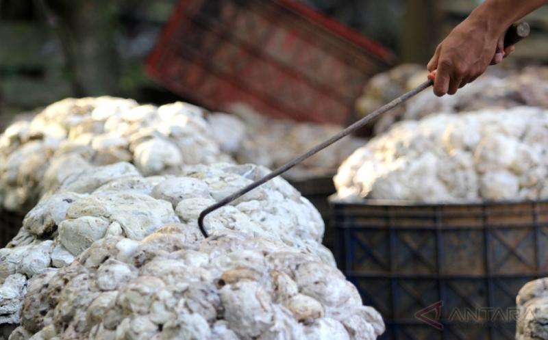 Pekerja mengangkat getah karet setelah proses penimbangan di Mesuji Raya, OKI, Sumatera Selatan, Jumat (13/1/2017). Harga karet alam di tingkat petani menunjukkan tren positif di kisaran harga Rp12.000 per kilogram dikarenakan adanya kenaikan harga karet dunia sejak awal tahun 2017.