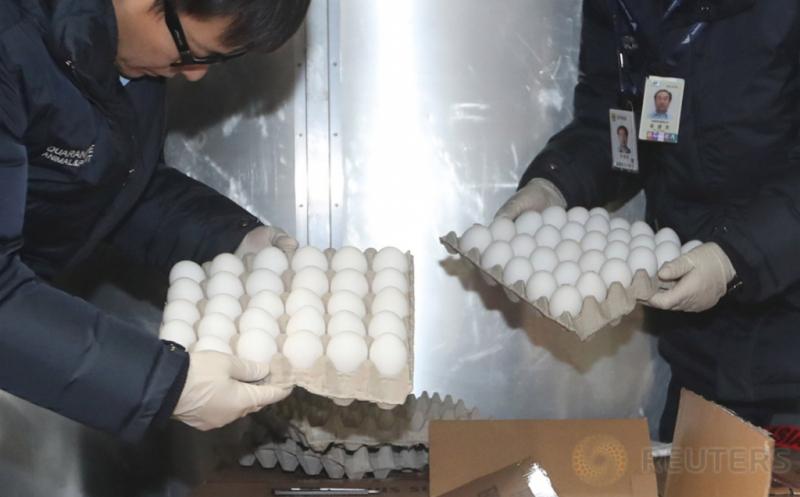Petugas dari Badan Karantina Pertanian memeriksa telur yang diimpor dari Amerika Serikat di Bandara Incheon, Korea Selatan, Sabtu (14/1/2017). Pemeriksaan tersebut dilakukan terkait flu burung.