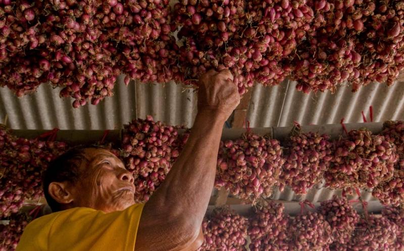 Kurangnya Permintaan dari Petani, Harga Bibit Bawang Merah Turun