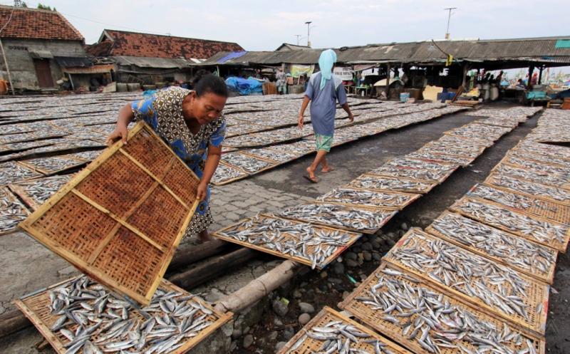 Pelaku Usaha Pembuatan Ikan Asin di Daerah Kesulitan Bahan Baku Ikan
