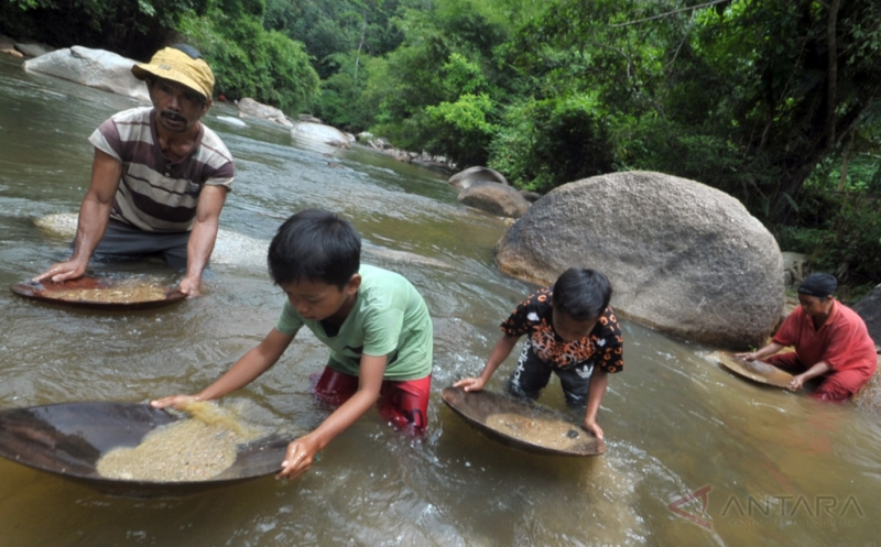 Anak-anak ikut mendulang emas di Sungai Batang Sumpu Lubuktasapik, Sijunjung, Sumatera Barat, Rabu (15/2/2017). Para pencari emas di tempat itu mengaku dapat mengumpulkan emas rata-rata satu gram per hari yang dijual Rp100 ribu.