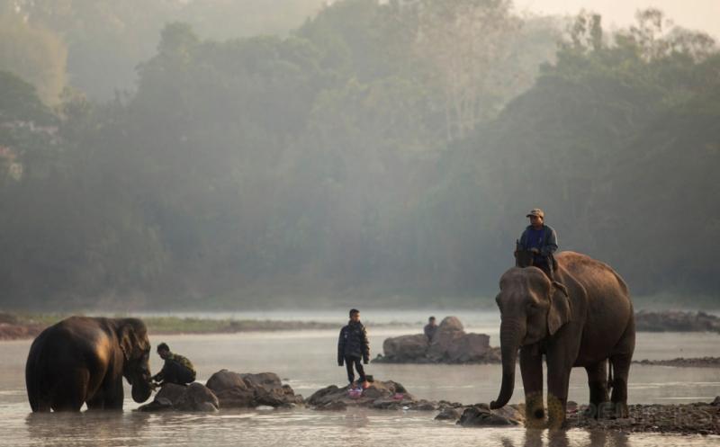 Pawang gajah memandikan gajahnya di sebuah sungai di Provinsi Sayaboury, Laos, Jumat (17/2/2017). Kegiatan yang merupakan bagian dalam Festival Gajah tersebut dilakukan untuk meningkatkan kepedulian masyarakat akan kelestarian gajah. (REUTERS/Phoonsab Thevongsa)