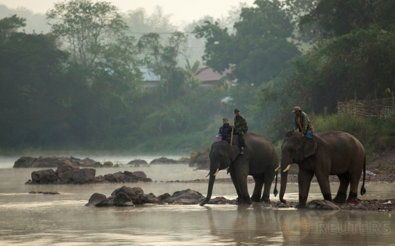 Meningkatkan Kepedulian Masyarakat akan Kelestarian Gajah