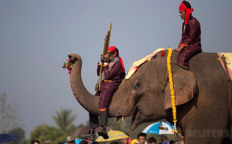 Yuk, Tengok Gajah saat Berlatih Jelang Pembukaan Festival Gajah di Laos!