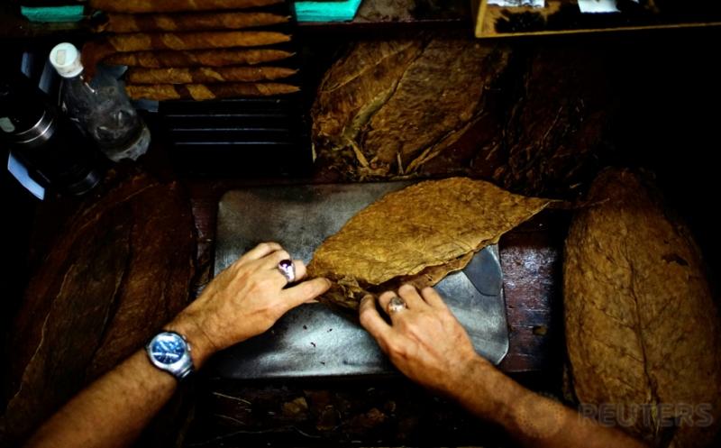Melihat Lebih Dekat Aktivitas Pekerja Pabrik Cerutu Havana Kuba