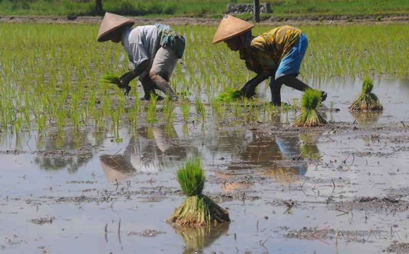 BPS : Nilai Tukar Petani Nasional Alami Penurunan