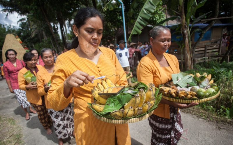 Tradisi Wiwitan, Wujud Syukur Jelang Panen Raya Padi