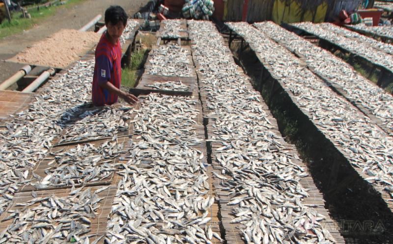 Pasokan Ikan Melimpah, Produksi Ikan Asin Mulai Meningkat