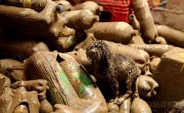 Seekor anjing berada di antara botol di sebuah rumah yang terendam lumpur akibat banjir bandang di Huachipa, Lima, Peru, Minggu (19/3/2017) waktu setempat. (REUTERS/Mariana Bazo)