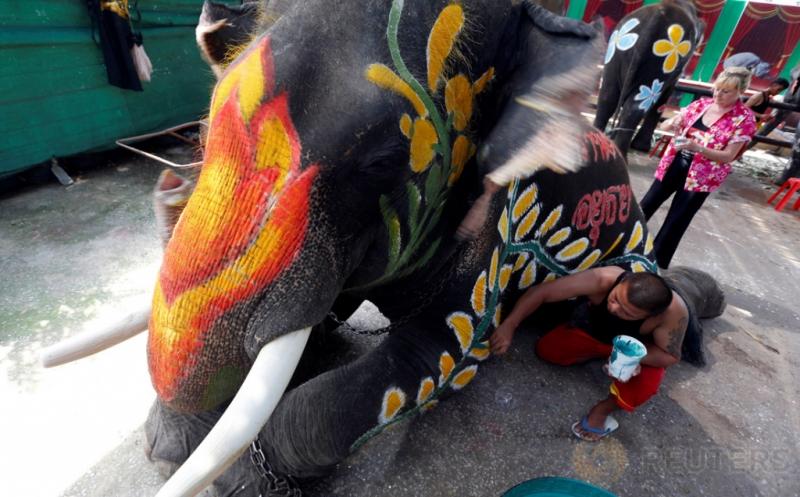 Sentuhan Kuas Cat di Badan Gajah pada Festival Songkran