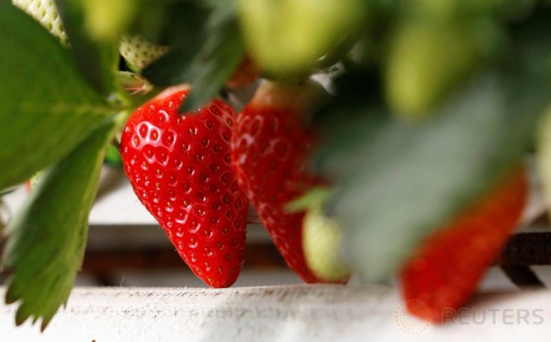 Berada di Kebun Ini Bikin Anda Ingin Memetik