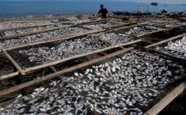 Warga melakukan proses penjemuran ikan asin di desa Aeng Batu-Batu, Kecamatan Galesong Utara, Kabupaten Takalar, Sulawesi Selatan, Rabu (19/4/2017). Menurut pengepul ikan asin di daerah tersebut harga ikan asin relatif normal dijual dengan harga Rp10 ribu hingga Rp15 ribu per kilogram.