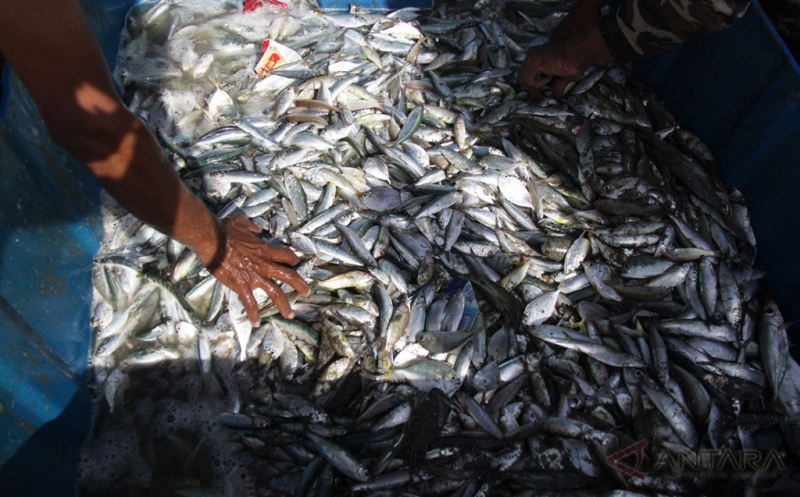 Nelayan memilah ikan hasil tangkapan pukat darat di Pantai Kampung Jawa, Banda Aceh, Aceh, Jumat (21/4/2017). Hasil tangkapan ikan di perairan setempat kembali berlimpah menyusul cuaca yang sudah membaik sejak sepekan terakhir.