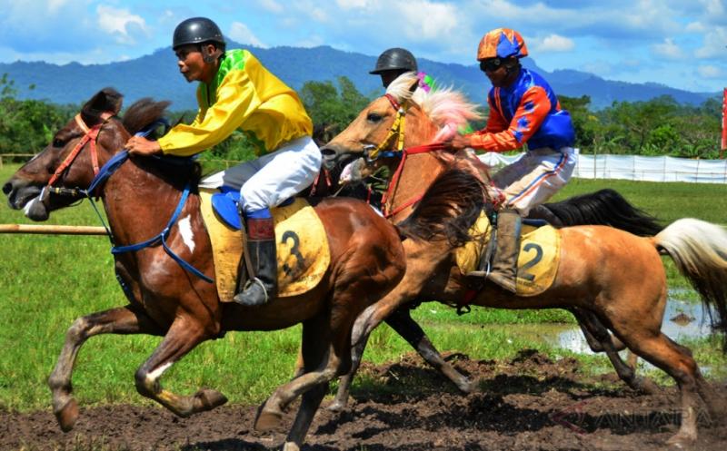 81 Kuda Adu Kecepatan di Kejuaraan Pacuan kuda Tradisional