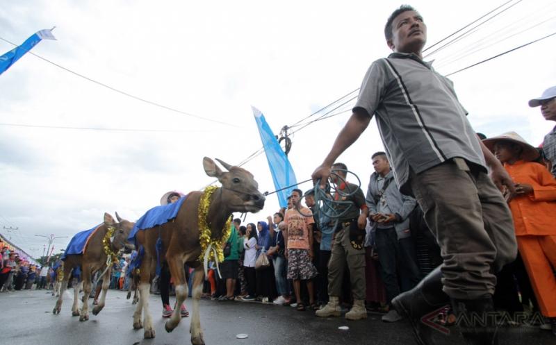 Rekor MURI Karnaval Anak Sapi Terbanyak