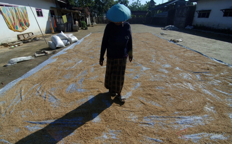 Aman, Ketersediaan Beras Jawa Timur hingga 2018