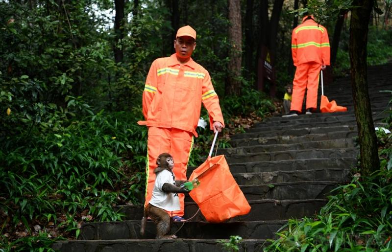 Seekor Kera Ikut Bantu Bersihkan Sampah di Taman Ekologi Shiyanhu