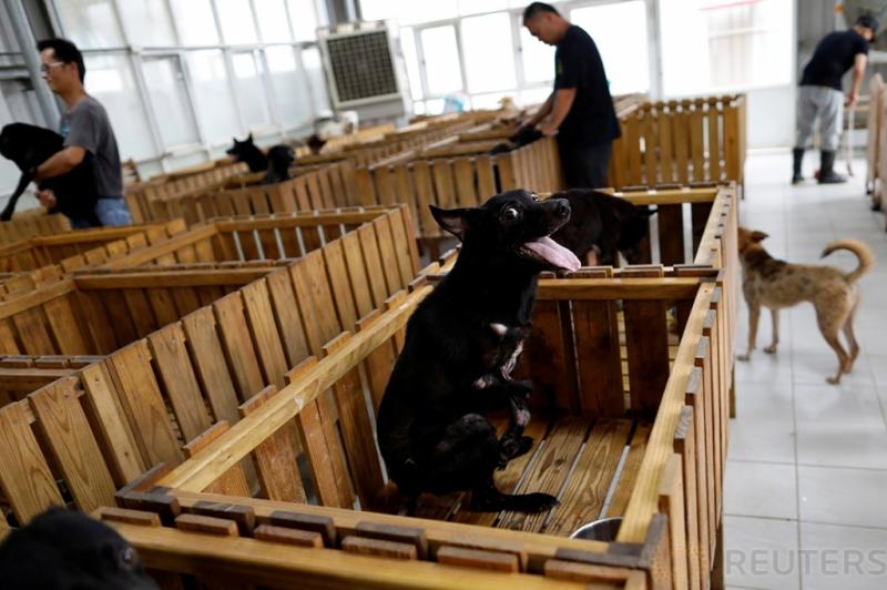 Penampungan Anjing di Taiwan Ciptakan Kursi Roda untuk Anjing Liar yang Pincang