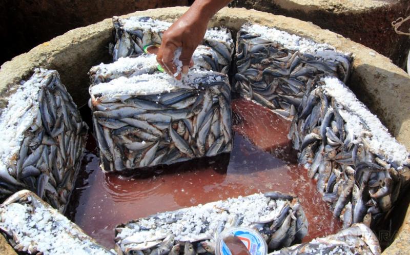 Tangkapan Nelayan Minim, Pengusaha Ikan Terpaksa Andalkan Ikan Beku Pabrik