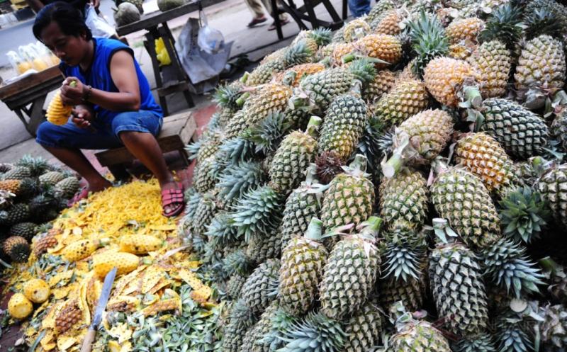Pasokan Buah Nanas dari Kawasan Pertanian Rasau Jaya