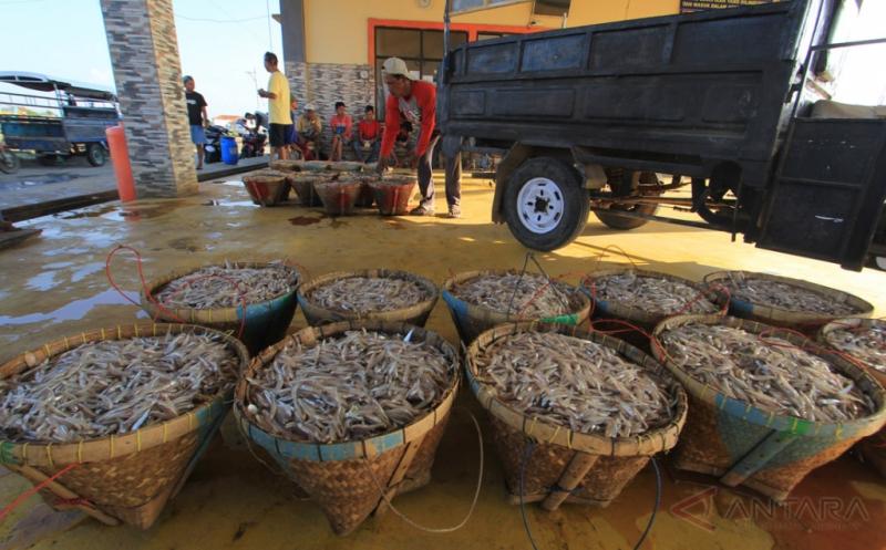 Memasuki Musim Angin Timur Tangkapan Ikan Teri Menurun