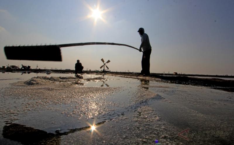 Panen Garam Perdana Petani Desa Santing Indramayu