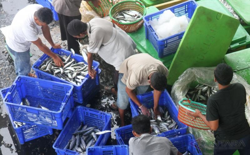 Tangkapan Melimpah, Harga Ikan di Aceh Turun