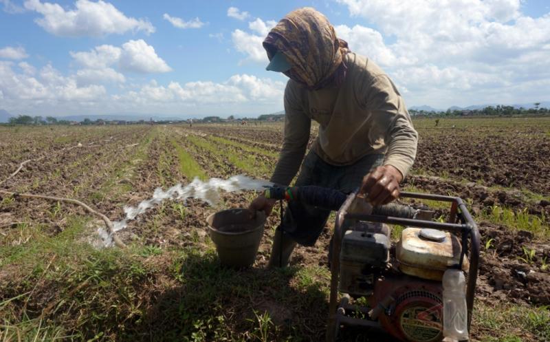 Petani Palawija di Tulungagung Andalkan Ketersediaan Air Bawah Tanah