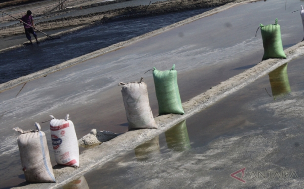 Pemerintah Optimis, Produksi Garam Nasional Tahun Ini Meningkat